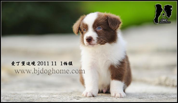 幼犬犬舍平面图
